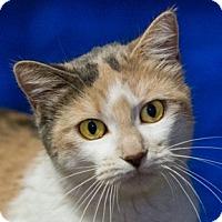 Adopt A Pet :: Shar - Calgary, AB