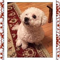 Adopt A Pet :: Adopted!!Baby Junie - IL - Tulsa, OK