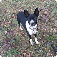 Adopt A Pet :: Booty - Ascutney, VT