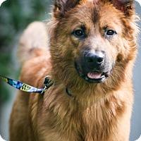 Adopt A Pet :: Theo - Miami, FL