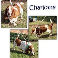 Adopt A Pet :: Charlotte - Marietta, GA