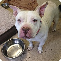 Adopt A Pet :: Babe - San Francisco, CA