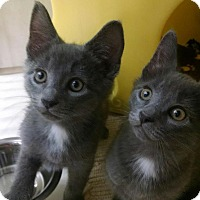 Adopt A Pet :: Wally - Warren, OH