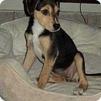 Adopt A Pet :: Donna - (in adoption process) - El Cajon, CA
