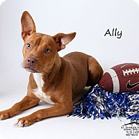 American Staffordshire Terrier Mix Dog for adoption in Luling, Louisiana - Ally