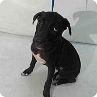 Adopt A Pet :: DOG #2 - Orlando, FL