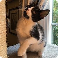 Adopt A Pet :: Victor - Wayne, NJ