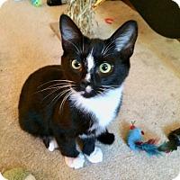 Adopt A Pet :: Peanut - Colmar, PA