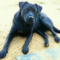 Adopt A Pet :: King #3 - Graceville, FL