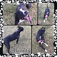 Adopt A Pet :: Beauty in CT - Manchester, CT