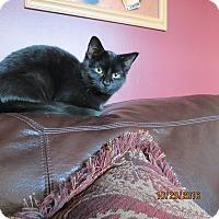 Adopt A Pet :: MaryAnn - Harrison, NY