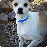 Adopt A Pet :: Thoreau - Casa Grande, AZ
