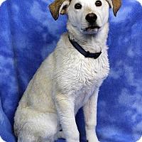 Adopt A Pet :: EMILY - Westminster, CO