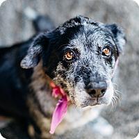 Adopt A Pet :: Angel - Los Angeles, CA