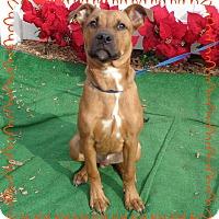 Adopt A Pet :: MARTY aka SCOUT - Marietta, GA