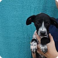 Adopt A Pet :: Odie - Oviedo, FL