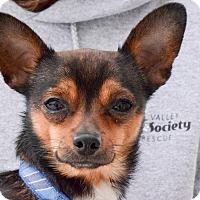 Adopt A Pet :: Benny - Meridian, ID