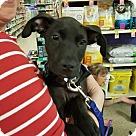 Adopt A Pet :: Argus