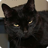 Adopt A Pet :: Kitty Spook - Saranac Lake, NY