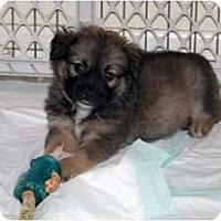 Adopt A Pet :: Bree - Minneola, FL