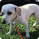 Adopt A Pet :: Snoopy