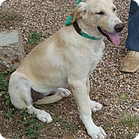 Adopt A Pet :: Dalia - Post, TX