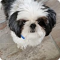 Adopt A Pet :: Dundee - Carey, OH
