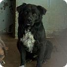 Adopt A Pet :: Mackie