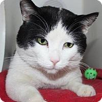 Adopt A Pet :: Shaver - Hamilton, ON