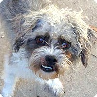 Adopt A Pet :: Alvin-ADOPTION PENDING - Boulder, CO