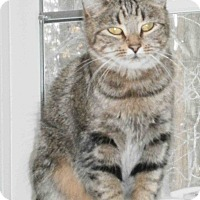 Adopt A Pet :: Zoe - Cleveland, OH