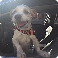 Adopt A Pet :: Mickey - Valley Village, CA