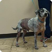 Adopt A Pet :: Boo - Oviedo, FL
