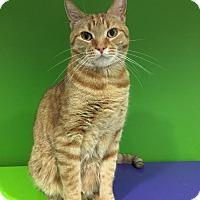 Adopt A Pet :: Blaze (URGENT) - Herndon, VA