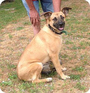 German Shepherd Dog Mix Dog for adoption in Texico, Illinois - Tulip - 62 lbs