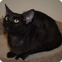Adopt A Pet :: Panzee - Wilmington, OH
