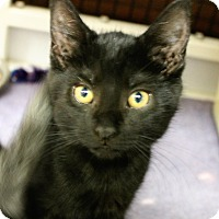 Adopt A Pet :: Halibut - Medina, OH