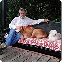 Golden Retriever Mix Dog for adoption in Petaluma, California - Piper