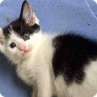 Adopt A Pet :: TROUBLE - Sacramento, CA