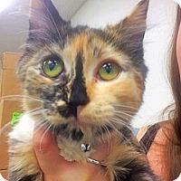 Adopt A Pet :: MARCO - Glendale, AZ