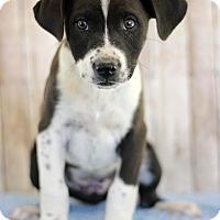 Adopt A Pet :: Rona - Waldorf, MD
