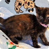 Adopt A Pet :: Nattie 25924 - Prattville, AL