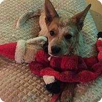 Adopt A Pet :: Frito Jalapeno - Pending! - Creston, OH
