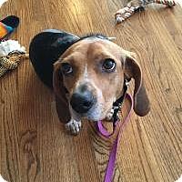 Adopt A Pet :: Vivian - Birmingham, AL