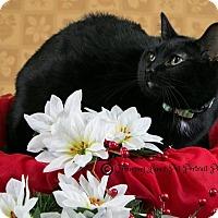 Adopt A Pet :: Snow - Davison, MI