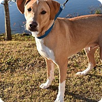 Adopt A Pet :: Woodstock - Pembroke, GA