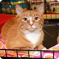 Adopt A Pet :: Pixie - Rochester, MN