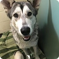 Adopt A Pet :: Quinn bonded with Shelly - Las Vegas, NV