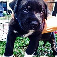 Adopt A Pet :: Bambi - Miami, FL