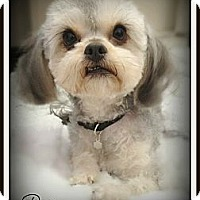 Adopt A Pet :: Pixie - Pascagoula, MS